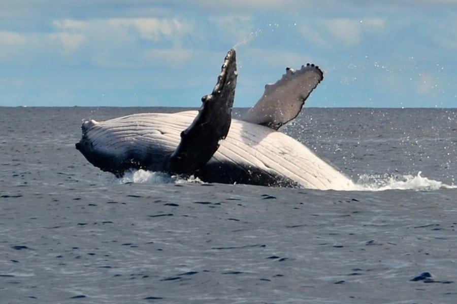 Na Tonge si môžete zaplávať s veľrybami. Ako na to?