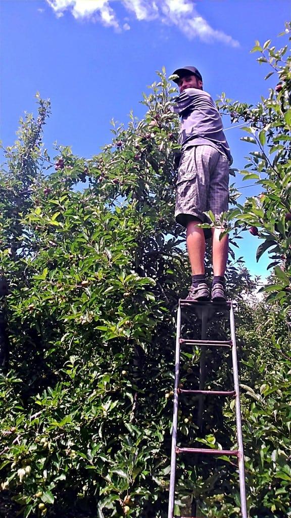 Práca na sade v Roxburghu