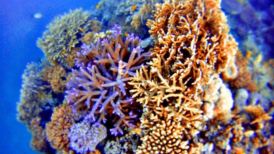 Blue Pearl Bay