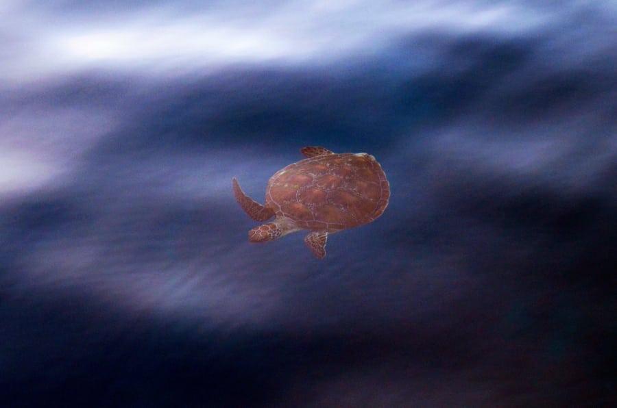 K obyvateľom Whitsundays patria aj korytnačky