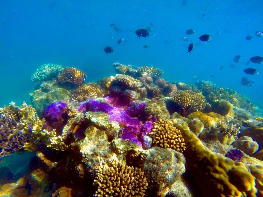 Veľký bariérový útes