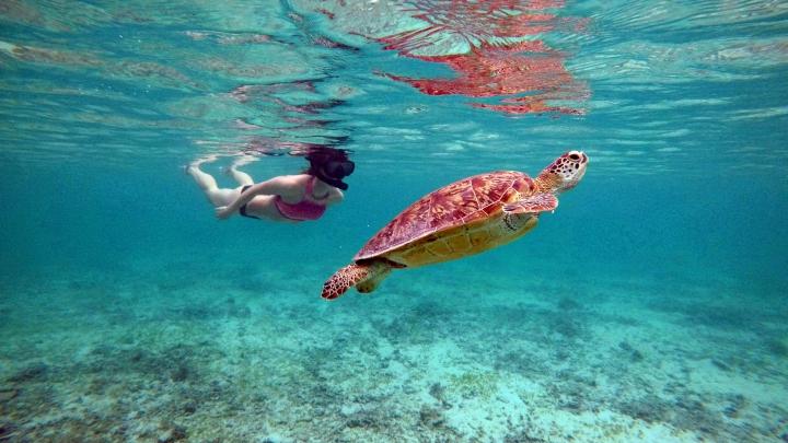 Šnorchlovanie s korytnačkami na Ama Beach, Okinawa